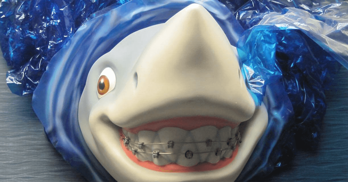 Close Up Of Shark Wearing Braces
